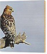 Hawk Looking Back Wood Print
