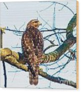 Hawk Love Wood Print