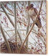 Hawk Nesting IIi Wood Print