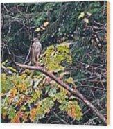 Hawk On A Limb Wood Print