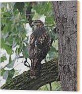 Hawk On Alert Wood Print