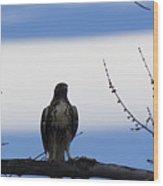 Hawk On Branch Wood Print