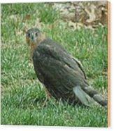 Hawk On The Grass Wood Print