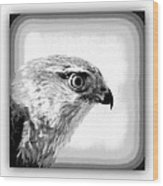 Hawk - Raptor Wood Print