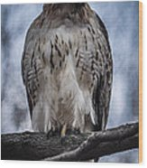 Hawk Red Tailed Wood Print