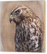 Hawk - Sphere - Bird Wood Print