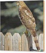 Hawk1 Wood Print