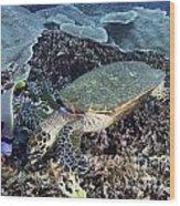 Hawksbill Sea Turtle Wood Print