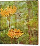 Hawkweed Wildflower Wood Print