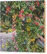 Hawthorn Berry Wood Print