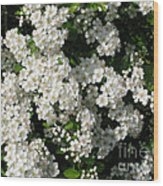 Hawthorn In Bloom Wood Print