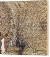 Hay Horse Wood Print