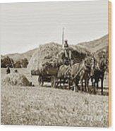 Horse-drawn Hay Wagon Carmel Valley California Circa 1905 Wood Print