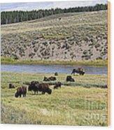 Hayden Valley Bison Herd In Yellowstone National Park Wood Print