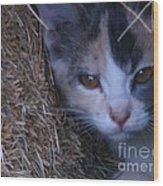 Haystack Cat Wood Print