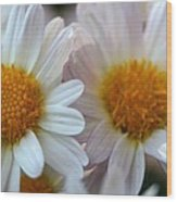 Hazy Day Daisies  Wood Print