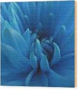 Hazy Shade Blue Mum Wood Print