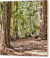 hd 379 hdr - Henry Cowell 2 Wood Print