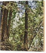 hd 380 hdr - Nisene Marks Wood Print