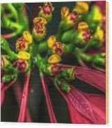 Hdr - Flowers Up Close Wood Print