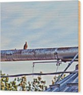 Hdr Bird On A Pipeline II Wood Print