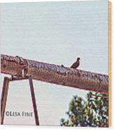 Hdr Dove On A Pipe Wood Print