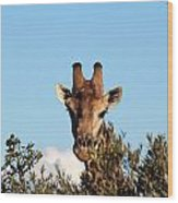 Head Above The Rest Wood Print