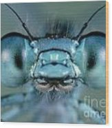 Head And Compound Eyes Of Damselfly Wood Print