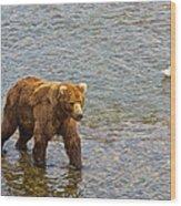 Head Grizzly Bear And Sea Gull In Moraine River In Katmai Np-ak  Wood Print