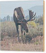 Head Lowered Bull Moose Wood Print