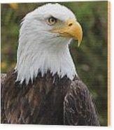 Head Of A Male American Bald Eagle Wood Print