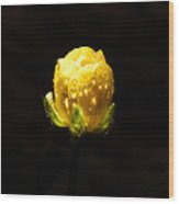 Head Of A Rose Wood Print by Sarah Crites