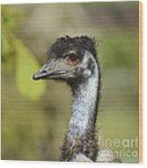 Head Of An Australian Emu Wood Print