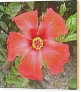 Head On Shot Of A Red Tropical Hibiscus Flower Wood Print