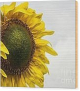 Head Up To The Rains - Sunflower Wood Print