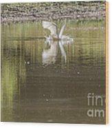 Headless Snowy Egret Of Rum Creek Wood Print