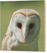 Headshot Of Common Barn Owl Wood Print
