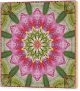 Healing Mandala 25 Wood Print by Bell And Todd