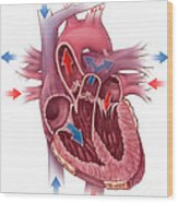 Heart Blood Flow Wood Print