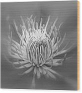 Heart Of A Red Clematis In Black And White Wood Print