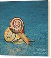 Heart Snails Wood Print