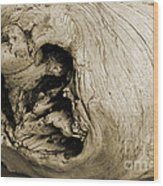 Heartwood - Sepia Tone - Wonderwood Collection - Olympic Peninsula Wa Wood Print