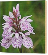 Heath Spotted Orchid Wood Print