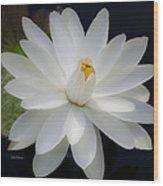 Heavenly Aquatic Bloom Wood Print by Julie Palencia