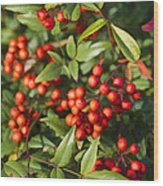 Heavenly Bamboo Red Berries Wood Print
