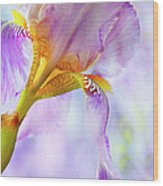 Heavenly Iris 2 Wood Print by Theresa Tahara