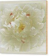 Heavenly Peony With Frame Wood Print