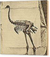 Heavy Footed Moa Skeleton Wood Print