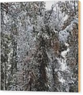 Heavy Snow On Fall Trees Wood Print