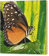 Hecale Longwing Butterfly Wood Print